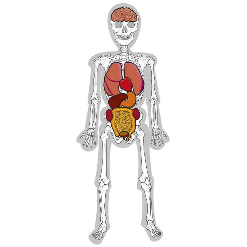 Juego educativo de anatomía: El hombre esqueleto | Sointec Proyectos