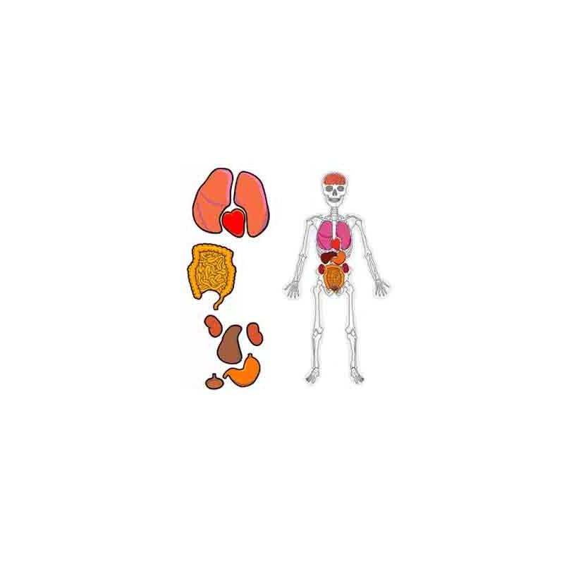 Famoso Web Del Juego Anatomía Inspiración - Anatomía de Las ...
