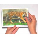 Juego didáctico fotografías de animales