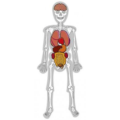 El hombre esqueleto huesos y rganos Sointec Proyectos